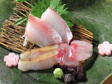 本日の 天然地魚の お造り